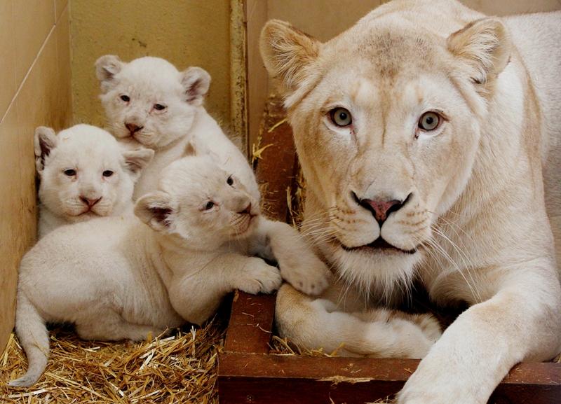 zoo safari borysew atrakcje dla dzieci